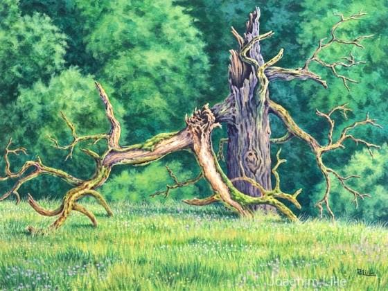 Waldkante