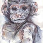 Tier Nr: 6