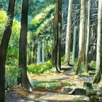 im_Wald