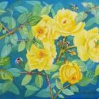 Bienenweide-Rose